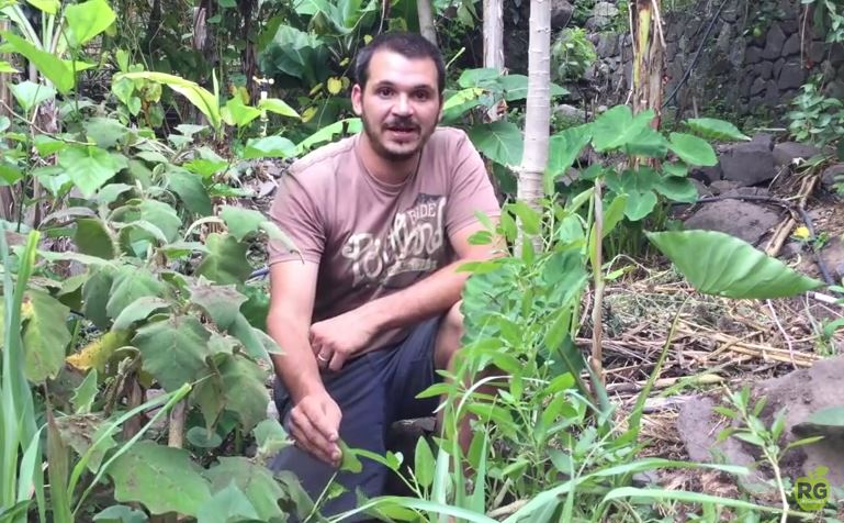 Permaculture_guatemala